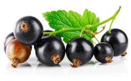 Berries black currant with green leaf fresh royalty free stock photography