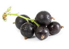 Berries of black currant Stock Photography