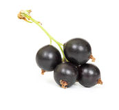 Berries of black currant Royalty Free Stock Photos