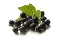 Berries of a black currant with leaf Royalty Free Stock Image