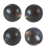 Berries of black currant macro Stock Photography