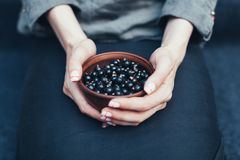 Berries of black currant in plates. In female hands. Vitamins and healthy eating concept royalty free stock images