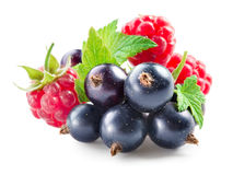 Berries. Black currant with raspberry isolated on white. Background Stock Images
