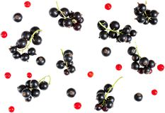 Berries of black currant and red currant isolated on white backg. Round. flat lay, top view. seamless background Stock Photos