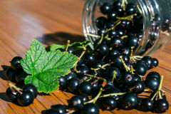 Berries of a black currant scattered on the table. From jars Stock Image