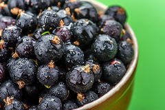 Berries black currants Royalty Free Stock Images