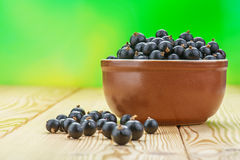 Berries black currants Royalty Free Stock Image