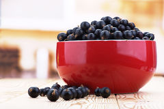 Berries black currants Stock Photo