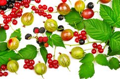 Berries black and red currants isolated on white background. Berries black and red currants, gooseberries and blackberries isolated on white background Royalty Free Stock Photo