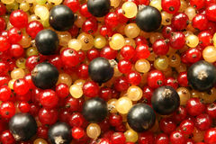 Berries of black red and white currant. For backgrounds or texture Royalty Free Stock Photography