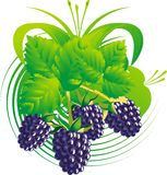 Berries and blackberry leaves. Berries and leaves of a blackberry against a vegetative ornament Stock Images