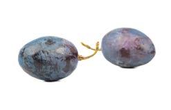 Berries blue grapes Stock Photos