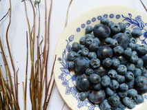 Berries of blueberries and plums on a white plate Stock Image