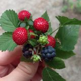 Berries bouquet. Amazing wild nature Stock Photos