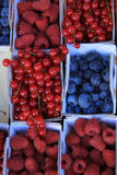 Berries in boxes. Blueberries, rubus, red currant and raspberries, displayed in cardboard boxes Stock Photo