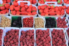 Berries in boxes. Blueberries, strawberries, rubus, red currant and raspberries, displayed in cardboard boxes Stock Images