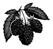 Berries bush Stock Photo