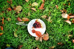 Berries cheesecake. A berries cheesecake on a green grass in autumn Stock Photo