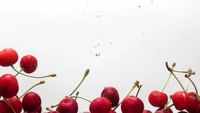 Berries cherry falling in water. On white background stock footage