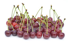 Berries of a cherry with shanks Stock Photography