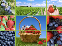 Berries Collection Collage Royalty Free Stock Images