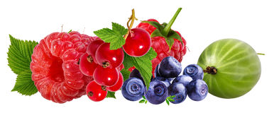 Berries collection. Raspberry, blueberry, currant, gooseberry  i Royalty Free Stock Photography