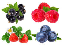 Berries collection. Raspberry, blueberry, currant, strawberry  i Royalty Free Stock Images