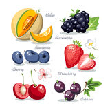 Berries collection set Stock Photography