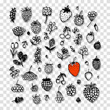Berries collection, sketch for your design Stock Photos