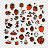 Berries collection, sketch for your design Royalty Free Stock Photos