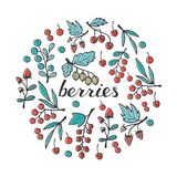 Berries Collection: Strawberry, Raspberry, Blackberry, Cherry, G Royalty Free Stock Photography
