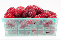 Berries in a container Royalty Free Stock Image