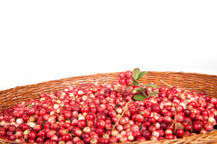 Berries a cowberry in the old basket isolated on white backgroun Stock Photos
