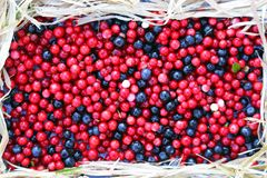 Berries cranberries and blueberries