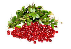 Berries of a cranberry with leaves. Lie on a table Stock Photos