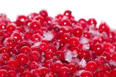 Berries   currant  frozen Stock Photos