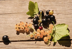 Berries of the currants and the gooseberry. On the wood in a countryside Stock Photography
