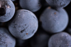 Berries of dark bunch of grape with water drops in low light isolated on black background. Close up, berries of dark bunch of grape with water drops in low light royalty free stock images