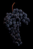Berries of dark bunch of grape with water drops in low light isolated on black background. Close up, berries of dark bunch of grape with water drops in low light stock images
