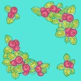 Berries decoration Stock Photos