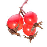 Berries of dog rose isolated on white Royalty Free Stock Image
