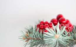 Berries with fir Royalty Free Stock Image