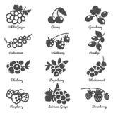 Berries Flat Icons Set Stock Photos
