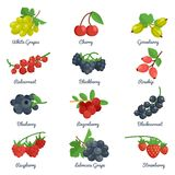 Berries Flat Icons Set Stock Photo