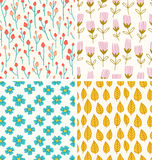 Berries and flowers patterns Stock Image