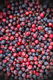 Berries. Food background. Stock Photos
