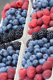 berries forest 免版税库存图片
