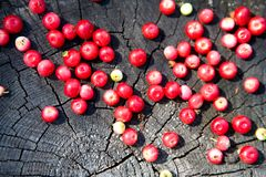 Berries of forest cranberries on a stump.n Royalty Free Stock Photos