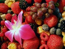 Berries, fresh fruit, flower in farmers' market Royalty Free Stock Images