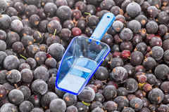 Berries frozen currants and blue scoop Royalty Free Stock Photography